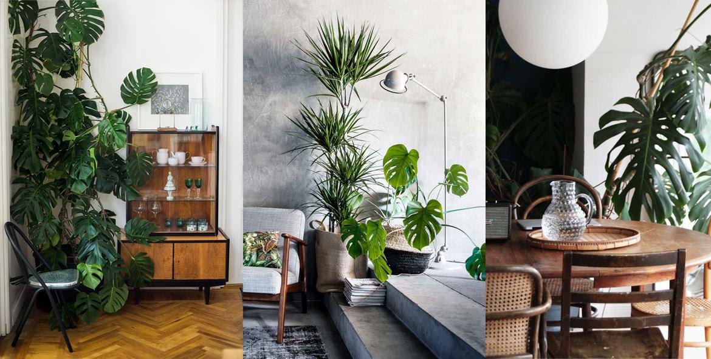 Piante da interno | Chiara Naseddu | Architecture-Interior ...